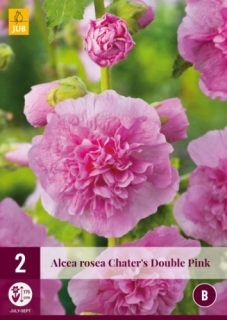 Alcea Rosea Chaters Double Pink 2 kusy