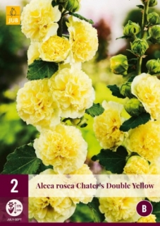 Alcea Rosea Chaters Double Yllow 2 kusy