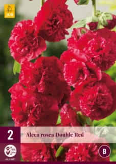 Alcea Rosea Chaters Double Red 2 kusy